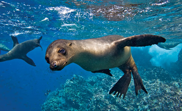 Galapagos Cruise – Travel Vacation Package