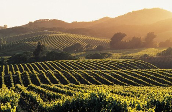 Delights of California – Wine Tour to the Napa Valley and San Francisco Travel Vacation Package